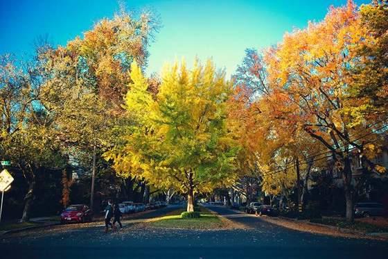 Fall in Midtown Sacramento