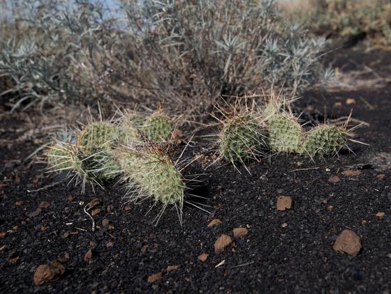 Autumn Cacti