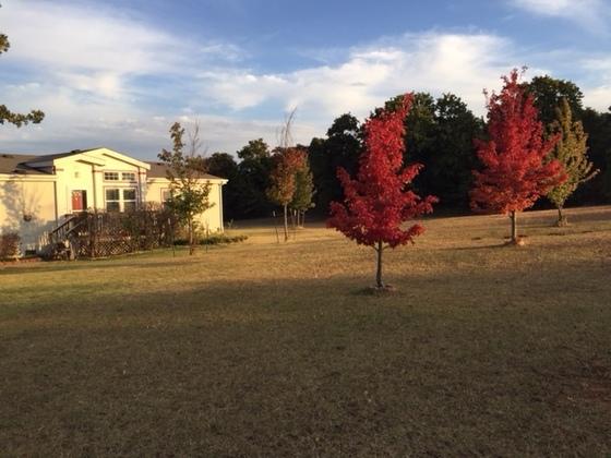Fall in Blanchard OK USA