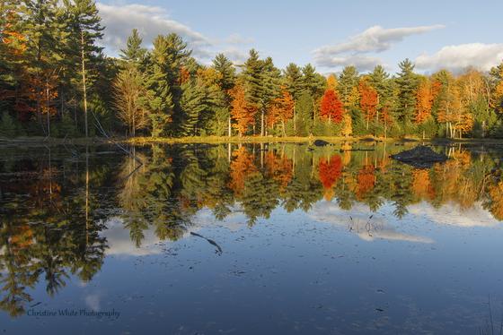 Autumnal Splendour