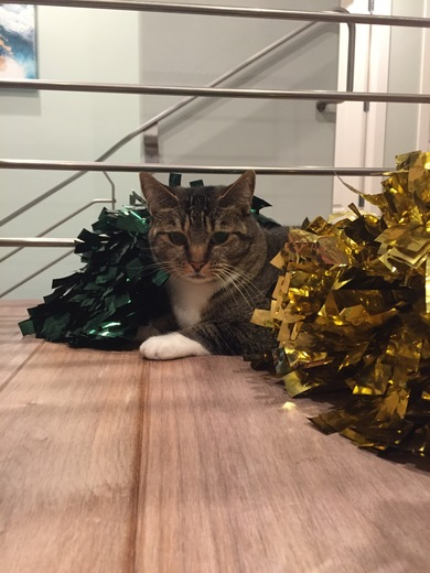 Cheer kitty Jane