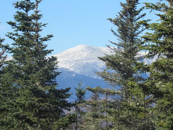 Mt. Washington through trees