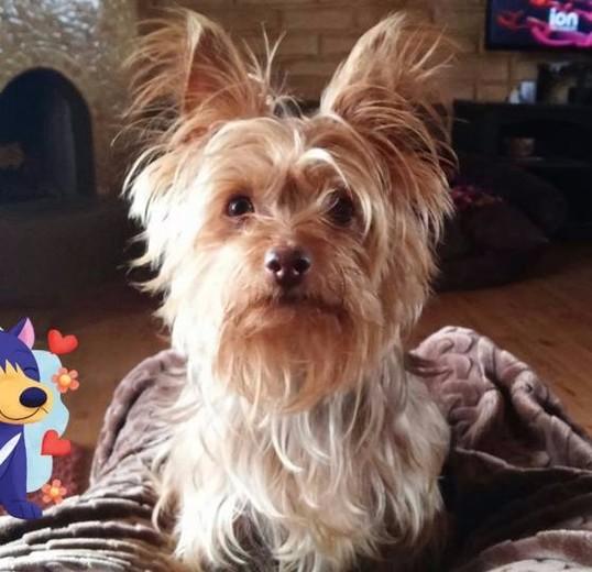 Coco's Birthday
