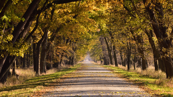 Loess Bluffs fall foliage