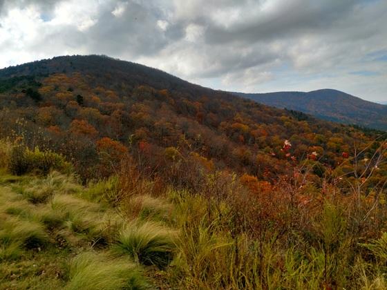 Last colors of fall