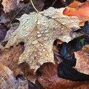 Late fall morning