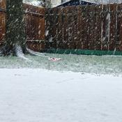 Premier jour de neige!