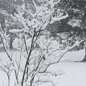rawdon sous la neige