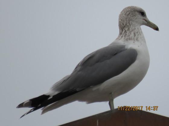 Seagull on streetlight