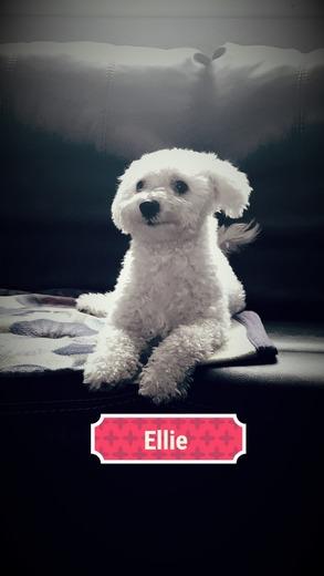 Happy 1st Birthday Ellie!