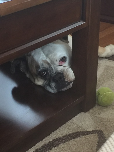 Please play with me.