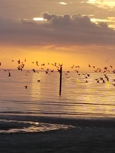 Sunrise Early birds in Gulfport harbor