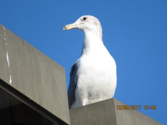 Seagull on street light