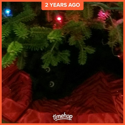 RayRay under the tree