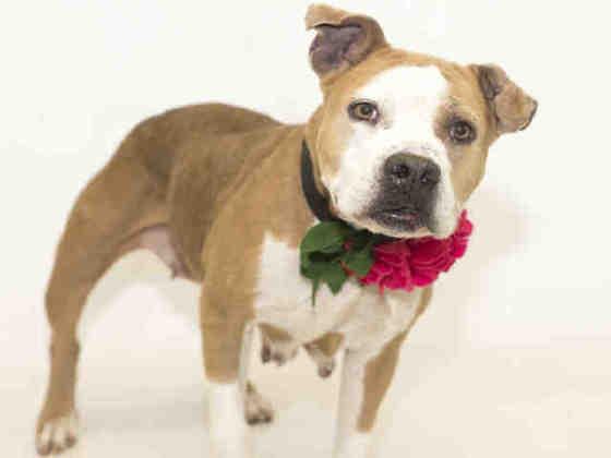 Rosie - dog friendly, hw negative! 3YO