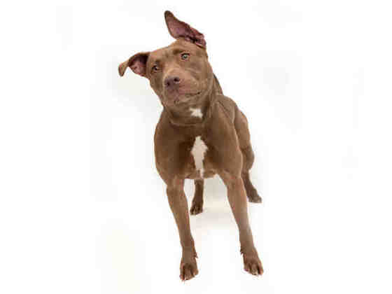 Zeda 2yo, looking for possible rescue or knowledgeable adopter