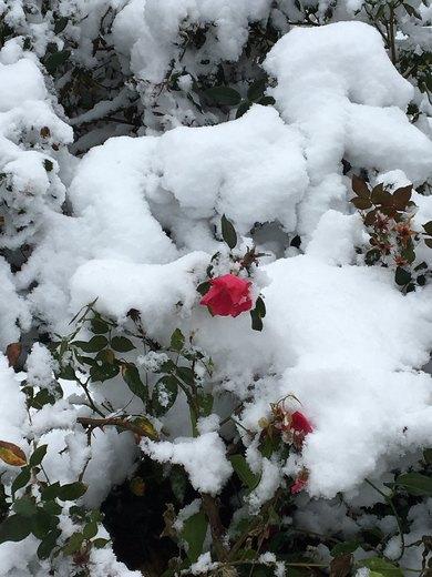 Dec. 2017 snow