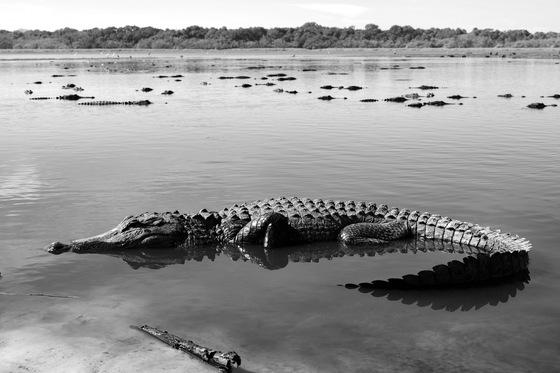 Myakka Gators