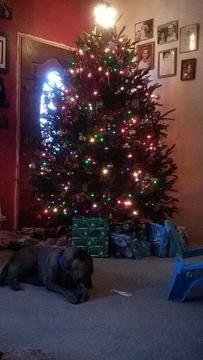 Doggy Christmas!
