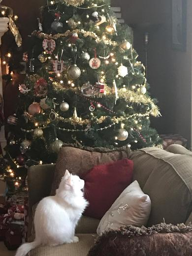 Zoey loves Christmas!