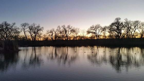 Winter Sunset in the Bosque