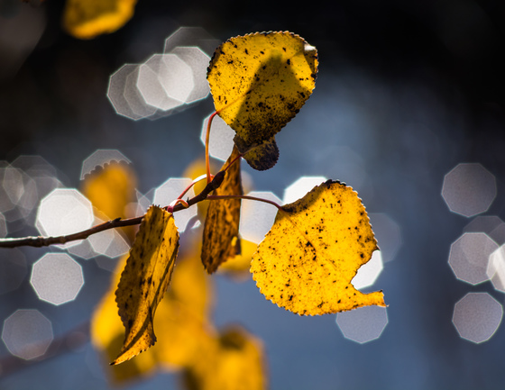 Autumn bokeh