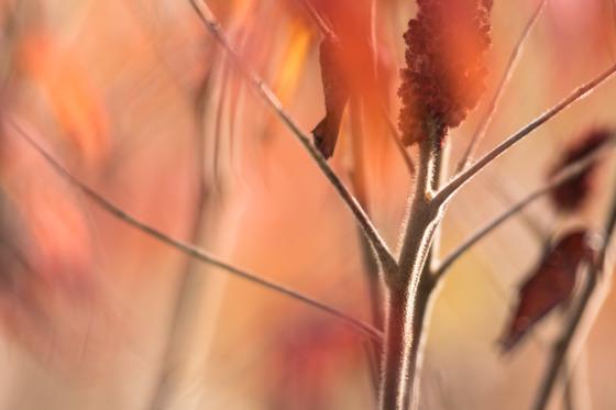 Autumn Monet