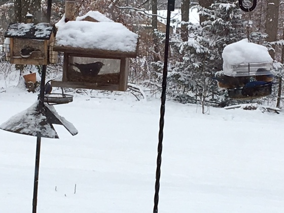 Bluebirds in Paradise, PA