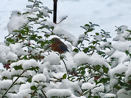 Bluebirds in Paradise, PA