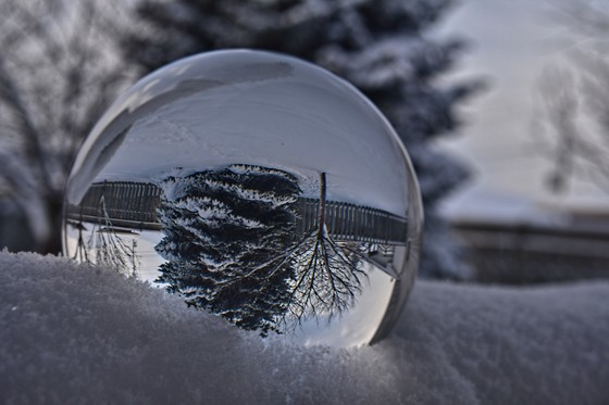 Blue Spruce Through a Crystal Ball