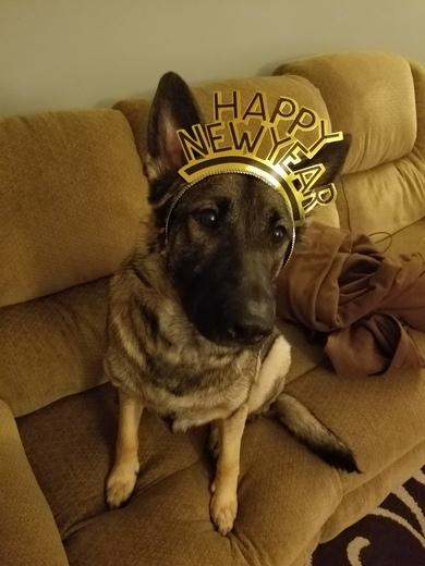 Luna says Happy New Year 2018!