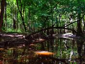 Congaree National Park