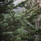 White Mountain Nation Forest