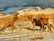 National Elk Refuge