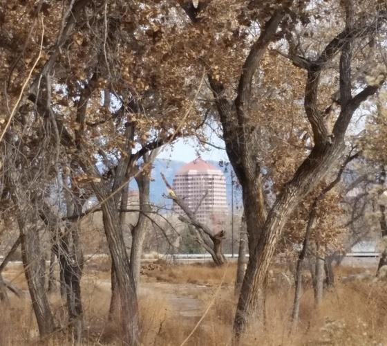 City buildings through the bosque