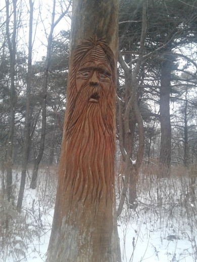 Old Man in the Woods