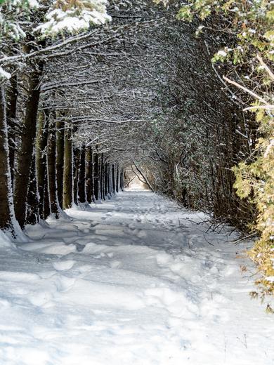 Spruce and Cedar Tunnel