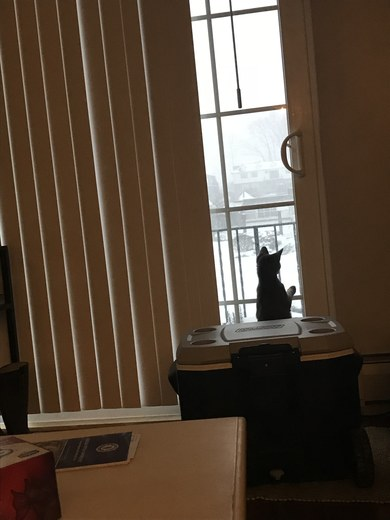 Curious kitten enjoying snow day