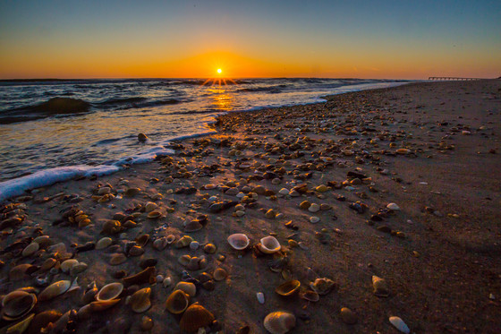 Winter seashells at Anastasia State Park Beach