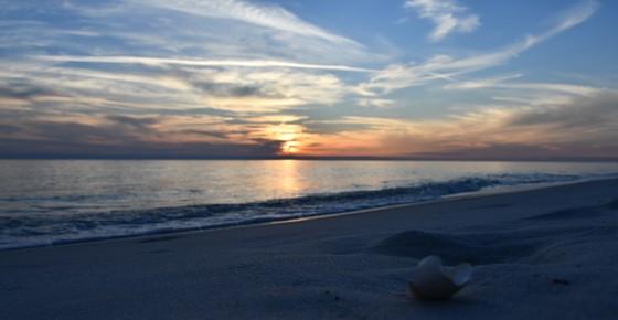 Sand flea sunset