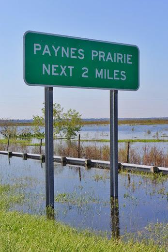 Paynes Prairie  next 2 miles