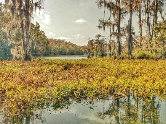 Quintessentially Florida