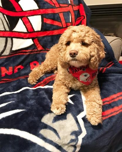 Pats dog photo