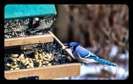 Animals feeding in our backyard