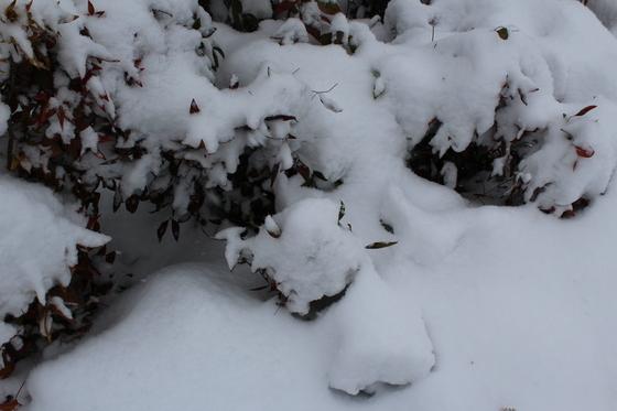 2018 Enjoying the snow