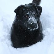Snow frolicking