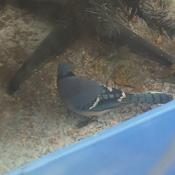 Blue Jay visits