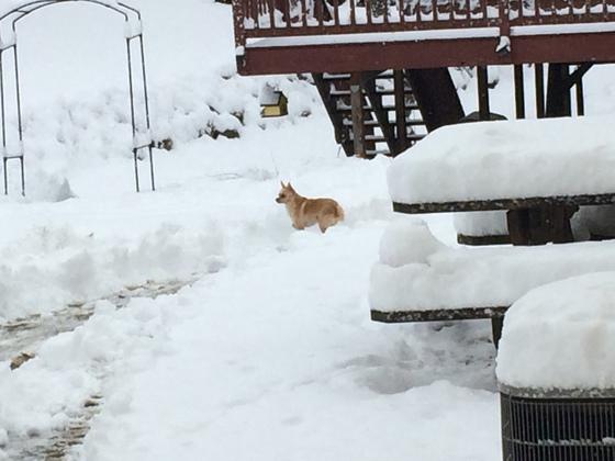 Town of Burlington Snowfall