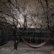 Splendeur glacée dans ma cour arriere