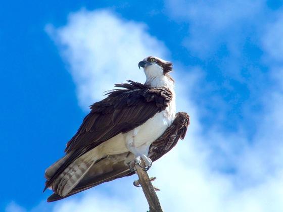 Osprey, Lovers Key State Park